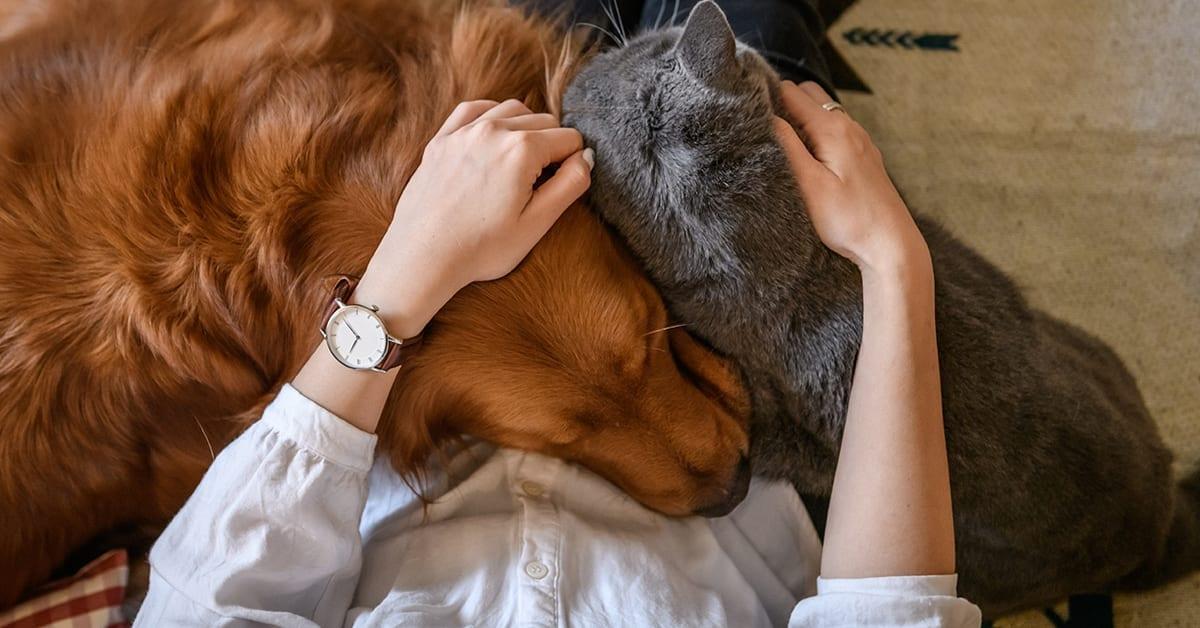How pets boost mental health